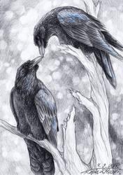 Ravens by lapis-lazuri