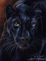 Black by lapis-lazuri