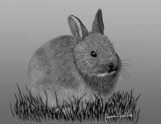 Bunny by Matsuemon