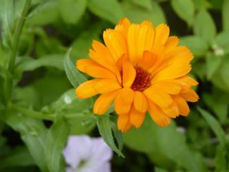 Just a flower by JohnShyGuy