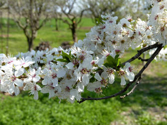 Spring bloom by JohnShyGuy