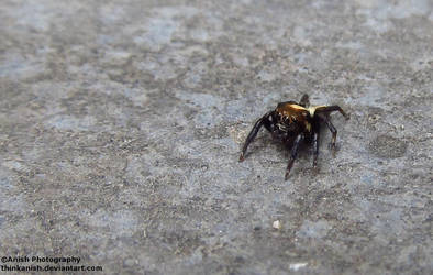 Spyder_Macro by thinkanish