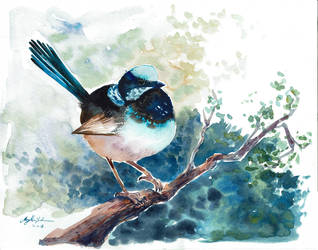 Fairy Wren by CheshFire