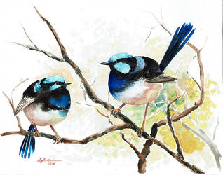 Two Fairy Wrens by CheshFire