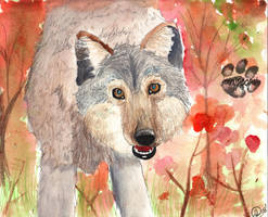 a wolf in fall by iknomyabcdsn123s