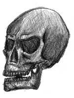 Skull Drawing by christofferwig