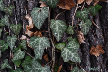 Leaves by AnitaBright