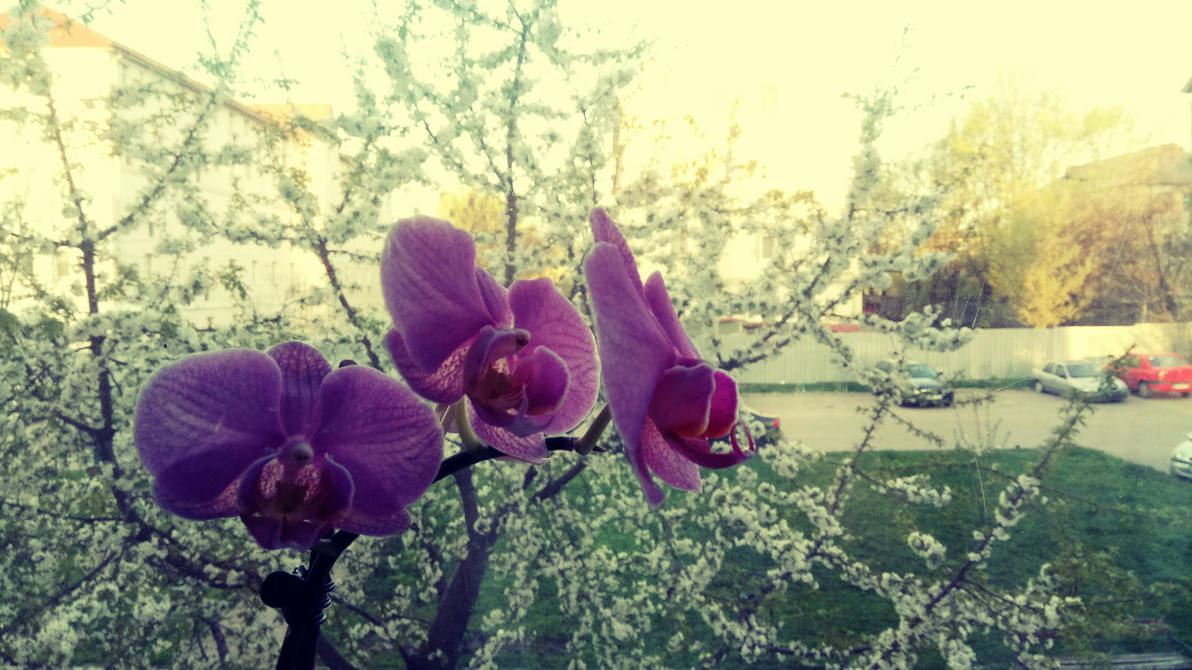 Front view with one of my orchid by BeKoL3tZ