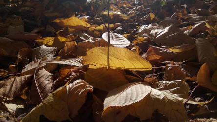 The Autumn Corner by BeKoL3tZ