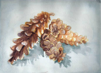 pine cones by kateleona