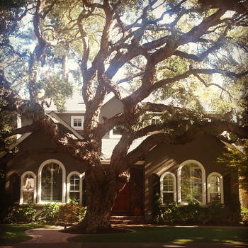 Oak Tree and House by RicksCafe