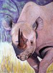 Rhino by Supach