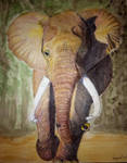 African Elephant by Supach