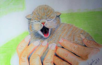 Sleepy Kitten by Supach