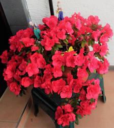A Floral Reward by Supach