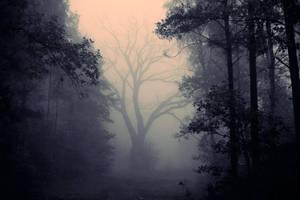 forest by borgil
