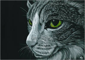 Black and White Cat by BlueSpiritWolf6