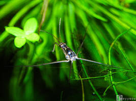 How Do Water Striders Float by rayyeow