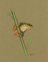 Tree frog by tropicart