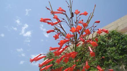 Red bells by diginstock