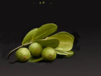 Fruit - Study by kaupaint