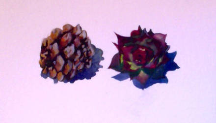 Pinecone and Succulent by JFrankW
