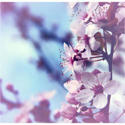 Blossom by euphorical-ecstazy