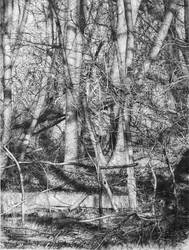 tree drawing, Collapse to Nature by arminmersmann