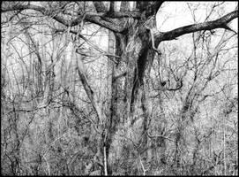 tree drawing II by arminmersmann