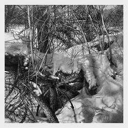 Winter Skins III by arminmersmann