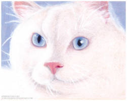 White Cat by toxicdesire