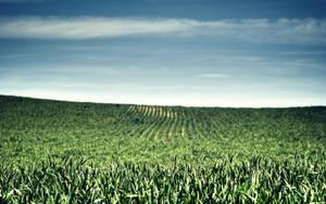Green by solefield