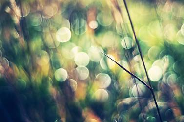 Phenomena by solefield
