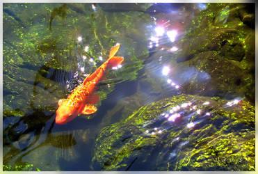 Goldfish by BFGL