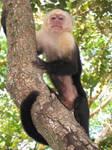 Monkey by Amor-Fati-Stock