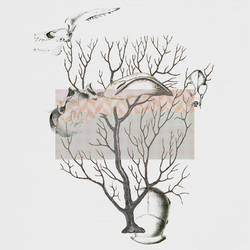 bones tree by stringraphy