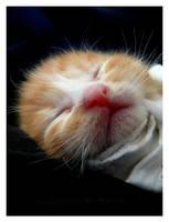 Suma Sleeps by lovelawlessly