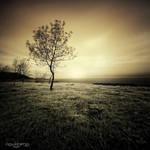 .: Beautiful Crazy :. by oguzceng