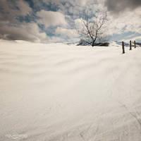 .: Dead Winter Reigns :. by oguzceng