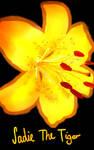 Tiger Lily by Bonelos