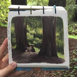 Redwood Trees Plein Air by Quackamos