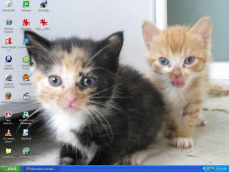 My Boyfriend Mom's Kitten by DimiraGurl