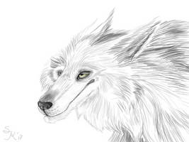 White Wolf by Sterreko
