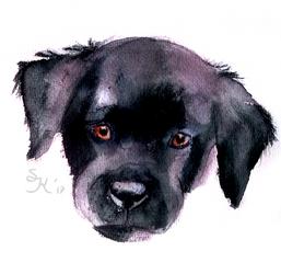 Puppy by Sterreko