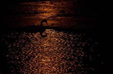 Swan'sea by Catosan