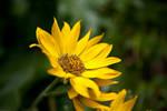 Mountain Flower by DarkroomMaster