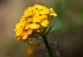 Bouquet in the Wild by DarkroomMaster