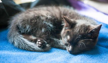 Bast Sleeping by jackcornelius
