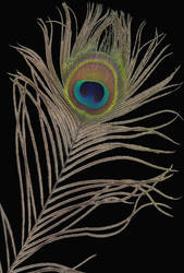 Peacock Feather II by PaulineMoss