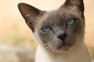 Ice-blue eyes by AnnaGiladi